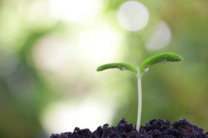 Pflanzenkeimling ragt aus Erde