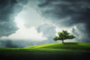 Wolken über Baum und Wiese